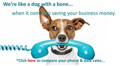 DogBoneContactpage